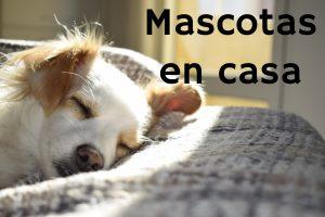 Limpiar alfombras con mascotas en casa